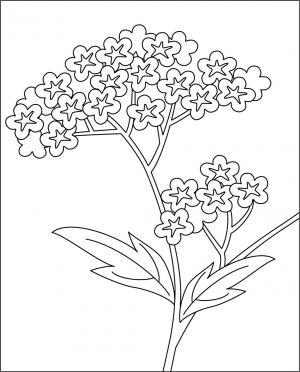 レク素材 秋の七草/オミナエシ|介護レク広場~レク素材や